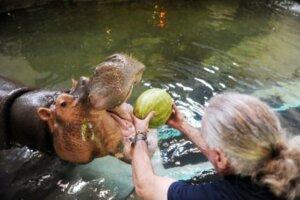 Donna Hippo Content